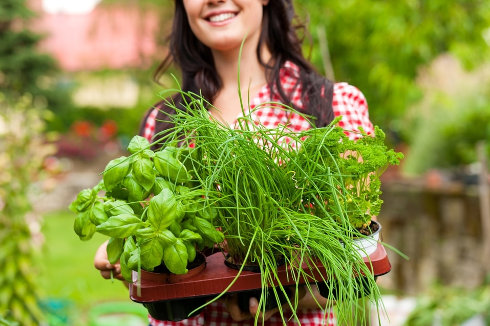 A woman growing an herb garden in her Perry Homes home.