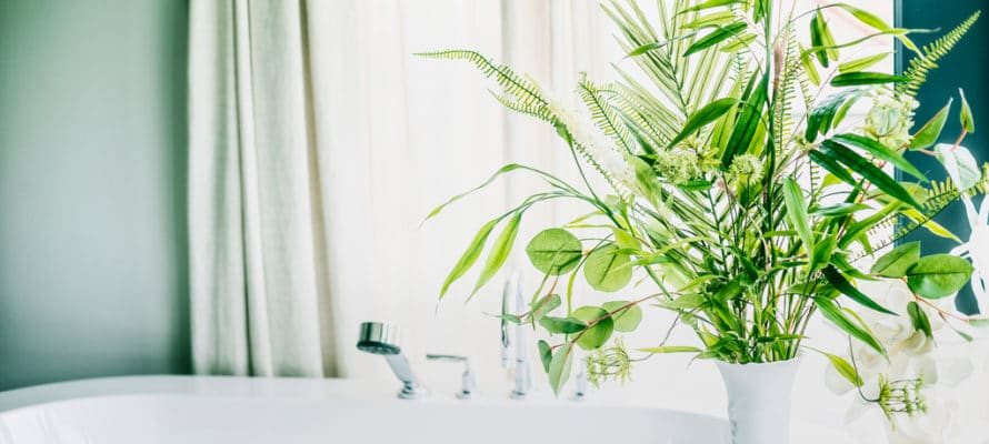 Utah home builder Green indoor plants in vase in bathroom , home interior concept