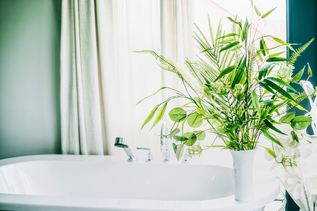 Utah home builder Green indoor plants in vase in bathroom , home interior concept